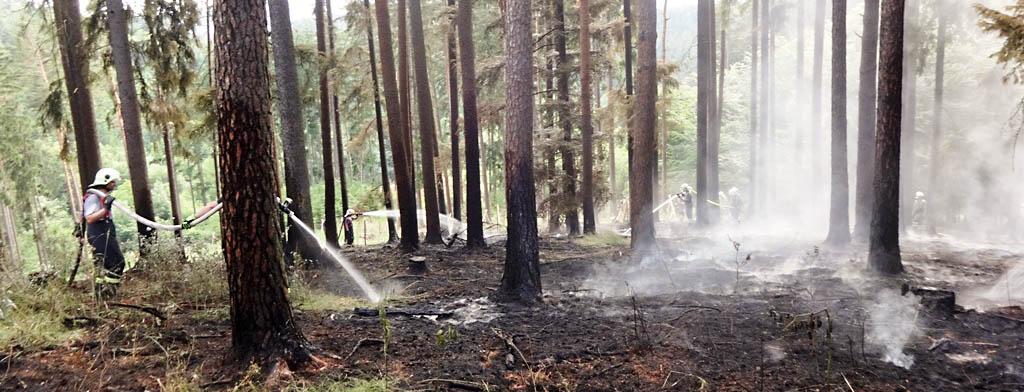 pozar-lesa-hasici